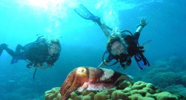 Dalış Turizminde Marka Şehir Antalya