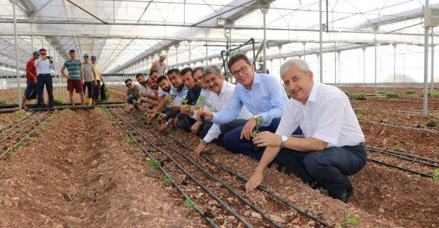 Patlıcan Fideleri Toprakla Buluştu