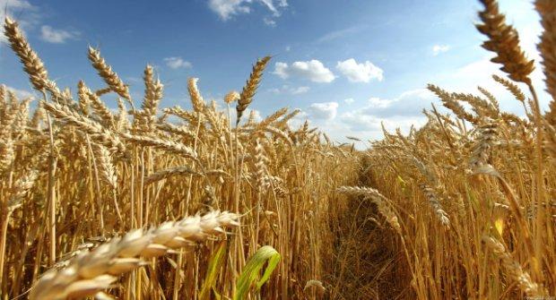 Rusya: Türkiye'nin Tarım Ürünleri Kısıtlamalarına Karşılık Vereceğiz