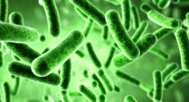 Bilim Adamları Bakteriden Kayıt Cihazı Ürettiler