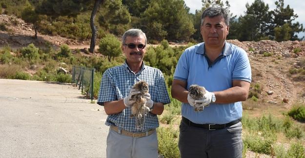 Tedavi edilen iki baykuş doğaya bırakıldı