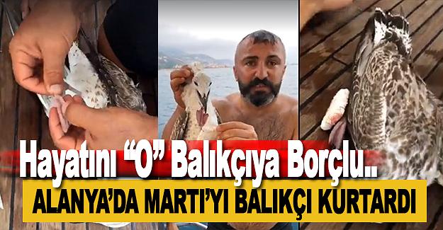 Alanya'da Martıyı Balıkçı Kurtardı