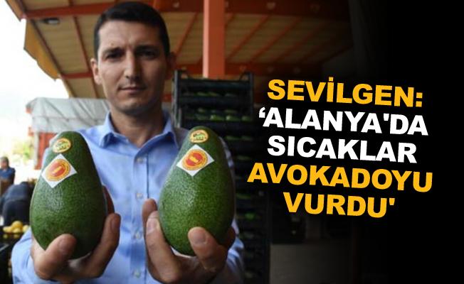 Sevilgen: 'Alanya'da sıcaklar avokadoyu vurdu'