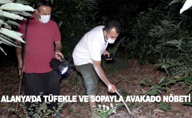 Alanya'da sabaha kadar tüfekle ve sopayla avokado nöbeti tutuyorlar