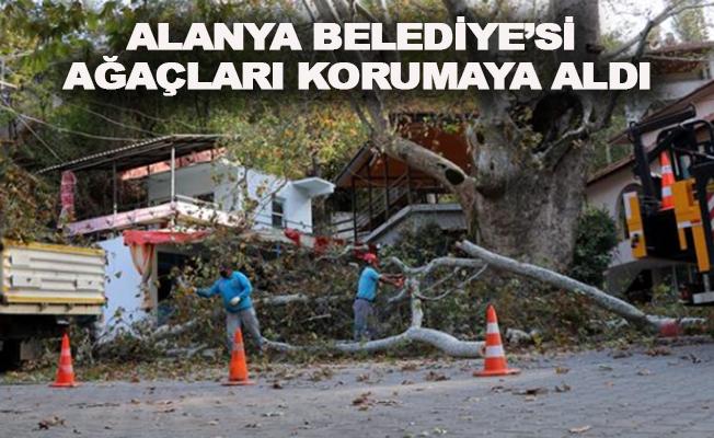 Alanya'da ağaçlar koruma altında