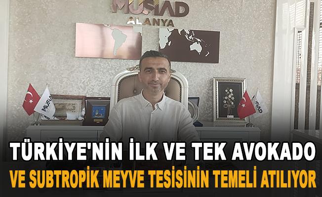 Türkiye'nin ilk ve tek avokado ve subtropik meyve tesisinin temeli atılıyor
