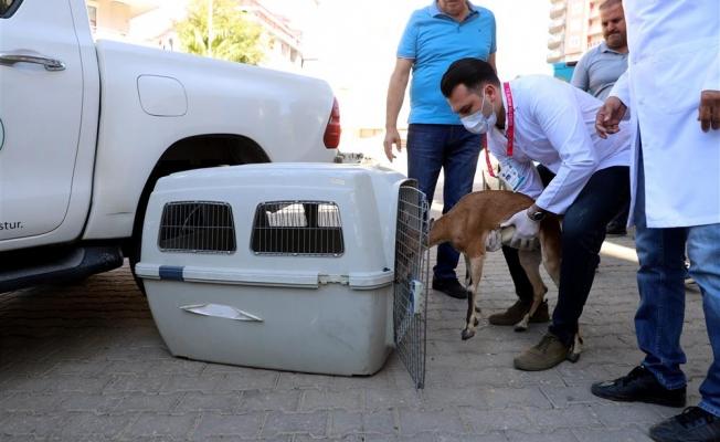 Hasta Ceylan'ın tedavisi Antalya'da devam edecek