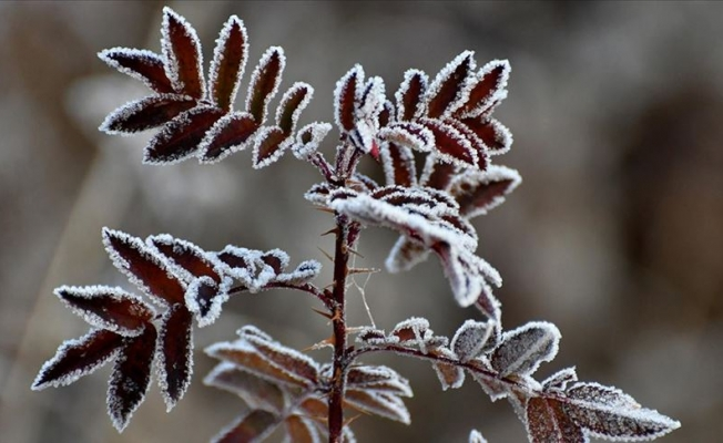 Meteoroloji'den don uyarısı yapıldı