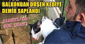 Alanya#039;da Balkondan Düşen Kediye...