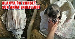 Alanya'da Köpeği Diri Diri Toprağa Gömdüler