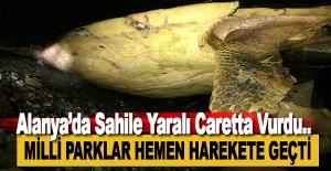 Konaklı'da Yaralı Caretta Caretta