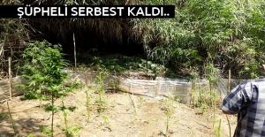Alanya'da Esrarla Yakalandı, Serbest Kaldı