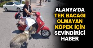 Alanya'da tek bacağı olmayan köpek için sevindirici haber