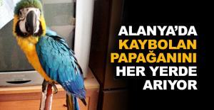 Alanya'da kaybolan Papağanını her yerde arıyor