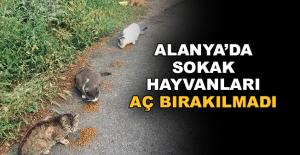 Alanya'da Sokak hayvanları aç bırakılmadı