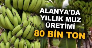 Alanya'da yıllık muz üretimi 80 bin ton