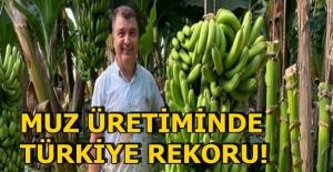Muz üretiminde Türkiye rekoru! Tam 134 kilo