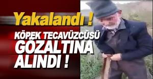 Köpek Tecavüzcüsü Gözaltına Alındı