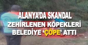 Alanya'da Toplu Köpek Katliamı