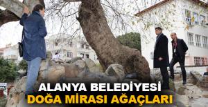 Alanya Belediyesi Doğa Mirası Ağaçları unutmadı