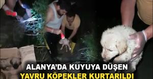 Alanya'da kuyuya düşen yavru köpekler kurtarıldı