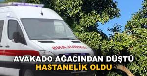 Alanya'da avokado ağacından düşerek yaralandı