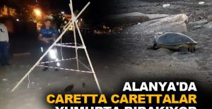 Alanya'da caretta carettalar yumurta bırakıyor