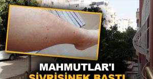 Mahmutlar'ı sivrisinek bastı