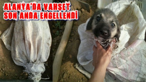 Köpeği Diri Diri Toprağa Gömdüler